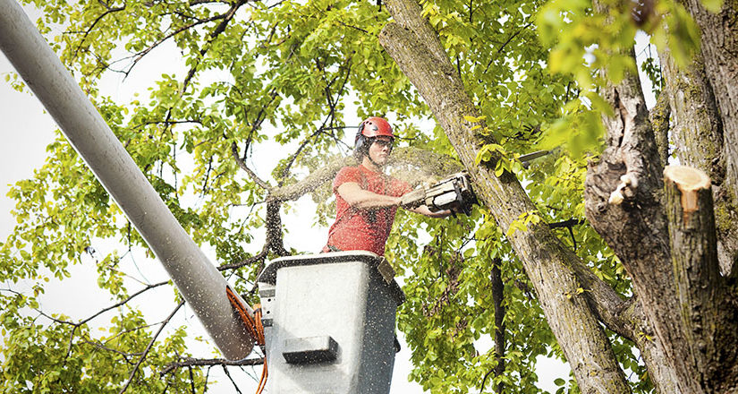 Arborist Services: Tips On How To Protect Trees From Storms